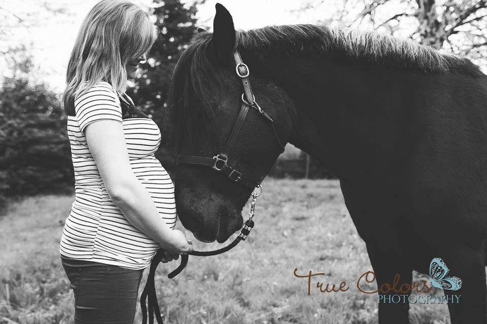 Horse maternity
